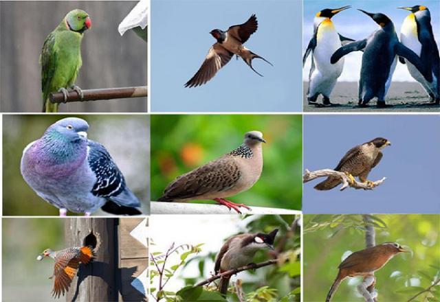 Những từ vựng tiếng Nhật về các loài chim