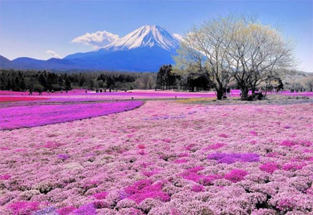 Nhật Bản - Đất nước đáng sống nhất thế giới
